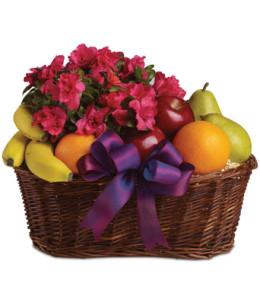 Fruit & Blooms